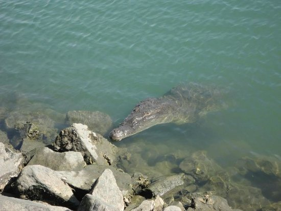 Hacienda Buenaventura Hotel & Mexican Charm All Inclusive: Crocodile at Marina area