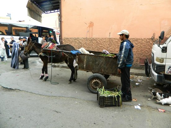 Palais Chahramane: Outside, a contrast to the lavish meal we just enjoyed - a broken mule pulls a broken cart.