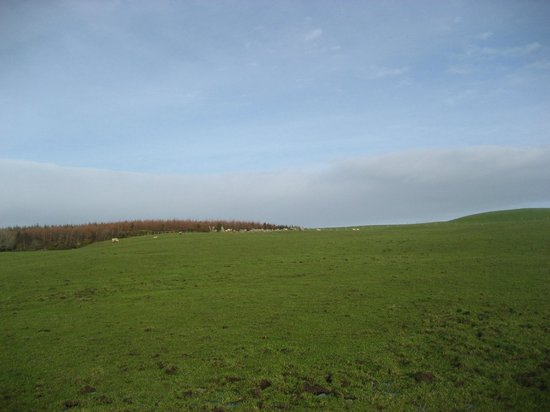 Bocan Stone Circle: From a distance