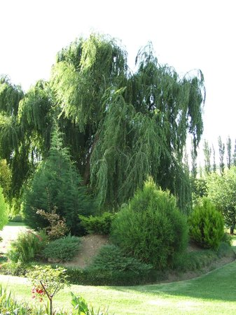 Lala Nathi Country Guesthouse: Weeping willow