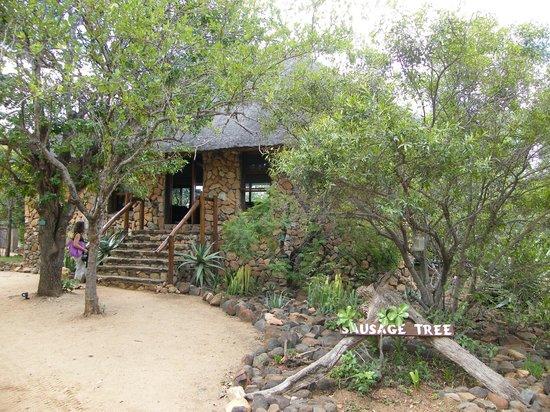 Sausage Tree Safari Camp : Sausage Tree