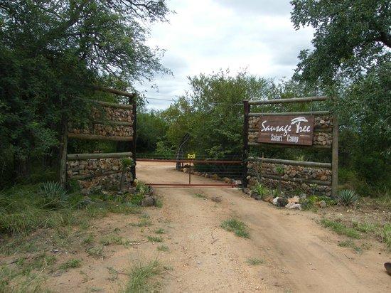 Sausage Tree Safari Camp : Sausage Tree, ingresso....