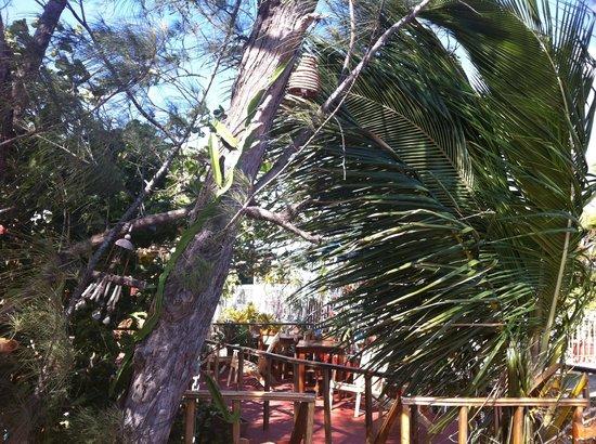 Hostal Villa Lagarto : Pretty plants everywhere