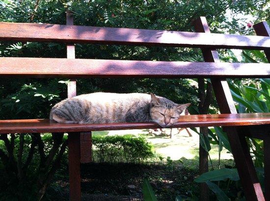 Pura Vida Resort: kitty!
