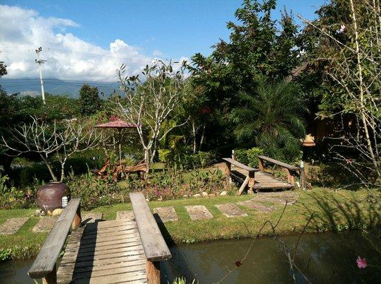 Pura Vida Resort: grounds