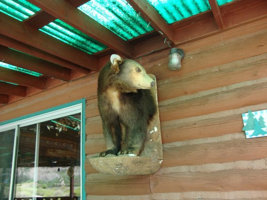 Sweetwater Lake Resort: Bear mount on wall on deck of restaurant/lodge