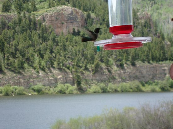 Sweetwater Lake Resort: Humming birds entertain you on the deck of the restaurant