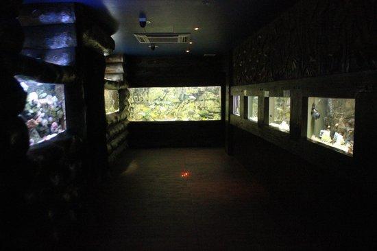 Blue Coral Aquarium