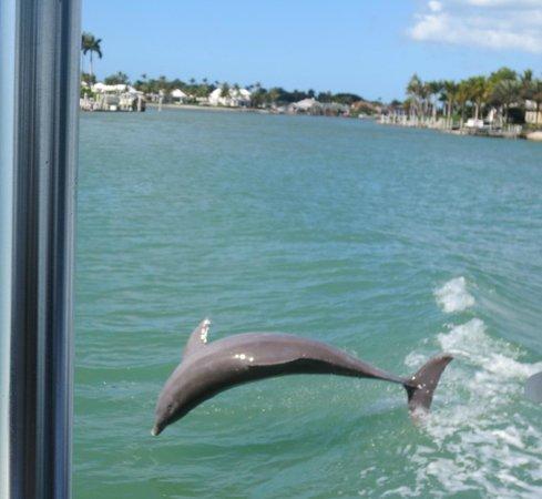 Double Sunshine Cruises: So close!