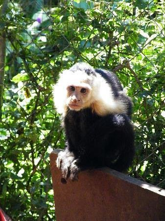Jungla de Panama Wildlife Refuge: Julian-so sweet!