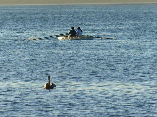 Casa Kootenay Bed and Breakfast: Bird watching rowers