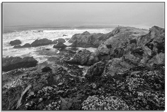 Bodega Head: Bodega Bay I
