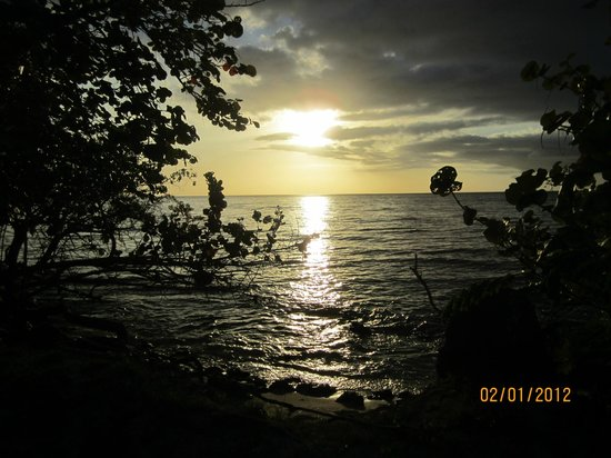 Negril Tree House Resort : Negril Jamaica