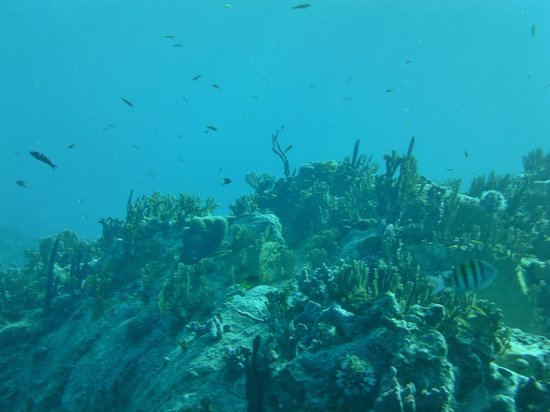 Blue Island DIvers : fish were beautiful