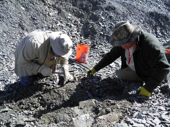 U-Dig Fossils : Bevan and I