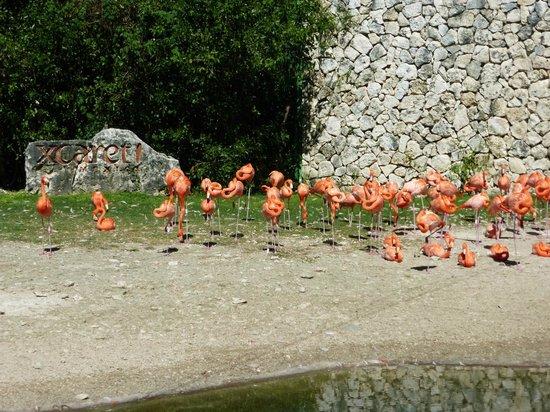 Xcaret Eco Theme Park : Rose ou Orange ?