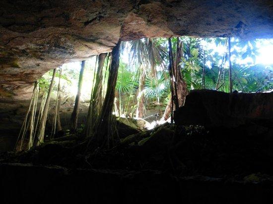 Xcaret Eco Theme Park : Quelques racines et végétations
