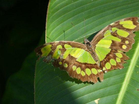 Xcaret Eco Theme Park : Un papillon dans la sphère aux papillons