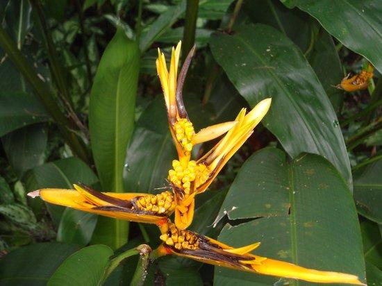 Fern Gully: Fleur