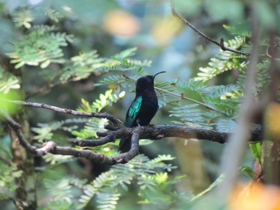 Hummingbird Beach Resort : Humming birds