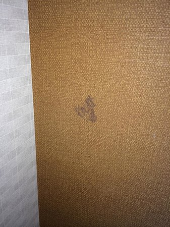 SpringHill Suites Irvine John Wayne Airport/Orange County: Stain on the wall (!)