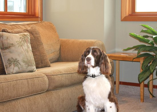 San Juan Suites : Living Room - The Conservatory - Pet Friendly