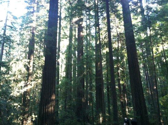The Redwood Riverwalk Hotel : Redwoods