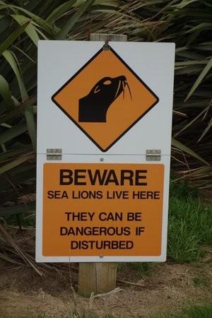 Curio Bay Natural Heritage Centre: Sea lion warning signs