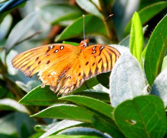 Bellingrath Gardens and Home: mariposas