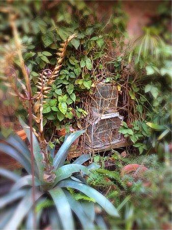 Soniat House: Garden in winter