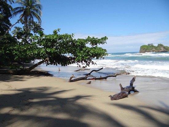 Puerto Viejo Beach: Playa y vegetación