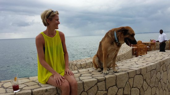 The SPA Retreat Boutique Hotel: Rosa - the friendly watchdog / lifeguard