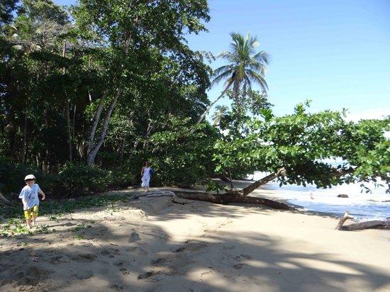 Puerto Viejo Beach: Playa con vegetación