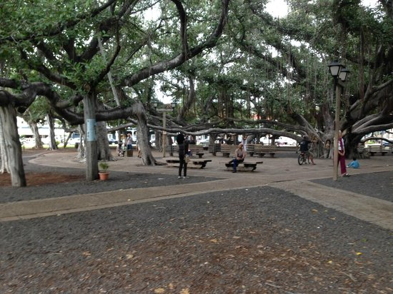 Banyan Tree Park : 150 year old banyan tree