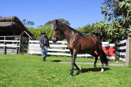 Hacienda La Alegria: gait horse