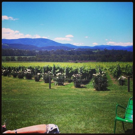 Yarra Valley Wine Tasting Tours : Domain Chandon vineyards