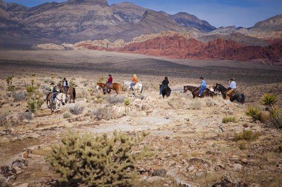 牛仔骑马游