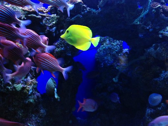 Maui Ocean Center: And you don't have to snorkel to see them!