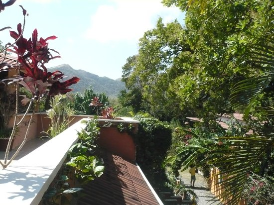 Casa Mariposa : View from the roof top