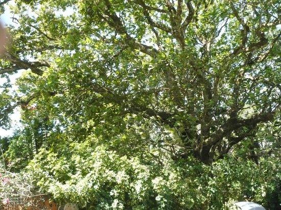 Casa Mariposa : Nice shady trees around