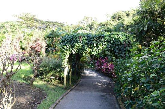 Deshaies picture of jardin botanique de deshaies - Jardin botanique guadeloupe basse terre ...