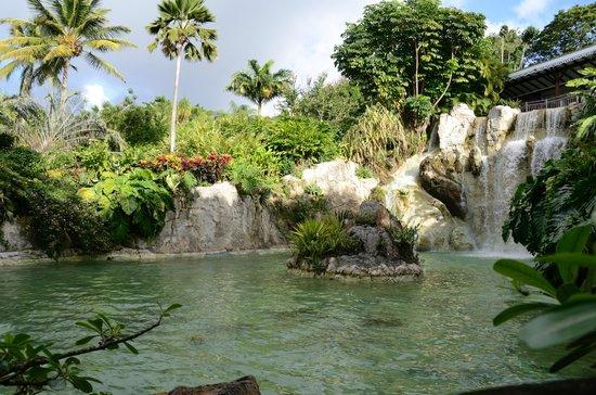 Jardin de deshaies picture of jardin botanique de for Jardin botanique deshaies