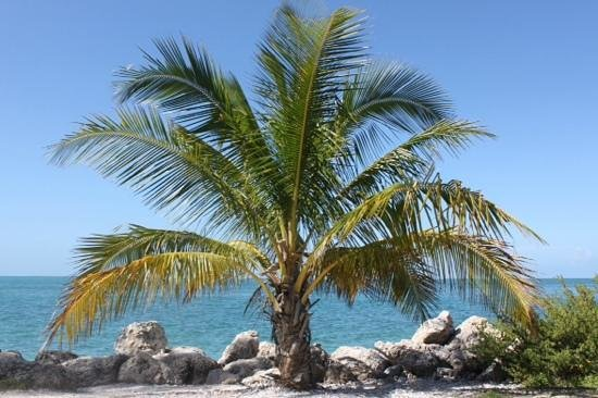 Fort Zachary Taylor Historic State Park : le paradis