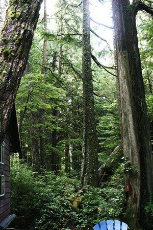 Surfs Inn Rainforest Cottages and Guesthouse: Elephant Cottage and Cedar Loft Suites