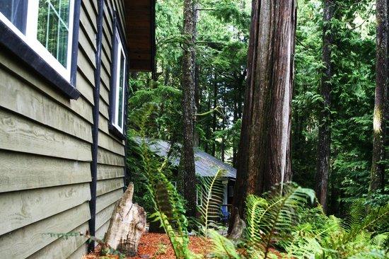 Surfs Inn Rainforest Cottages and Guesthouse: Cedar Loft Suite