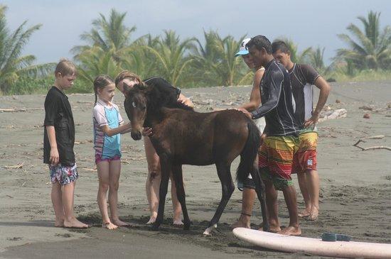 Manuel Antonio Surf School : foal on the otherwise desserted beach...beautiful!