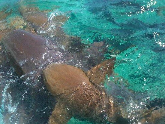 Splash Wave Tours Belize