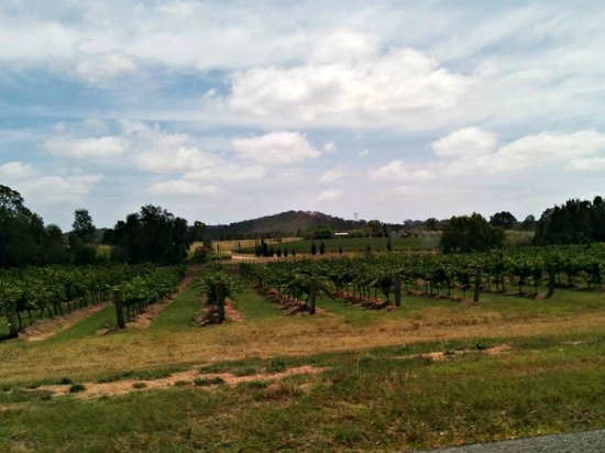 Kangarrific Tours : The vineyards were beautiful. Pictures don't do them justice.