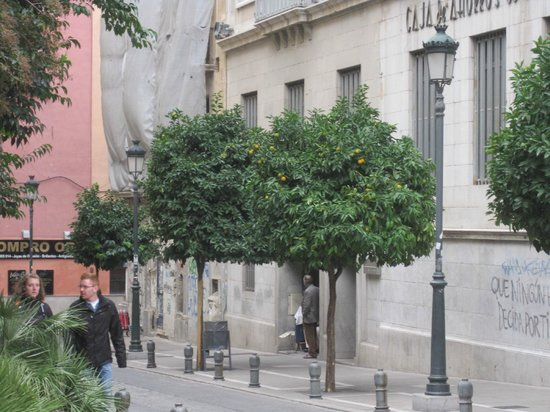 Santa Isabel la Real: Orange trees all over Granada