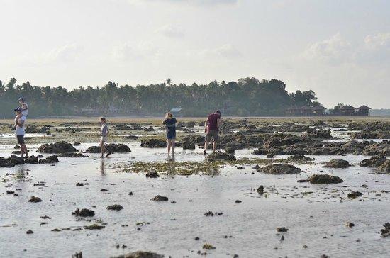 Loola Adventure Resort: Low-Tide Beach Discovery Walk - take good shoes